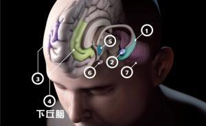 华人科学家《自然》发文:脑中这种干细胞与延寿抗衰老相关