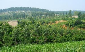 """我国集体林权改革基本完成,从""""要我造林""""变成""""我要造林"""""""