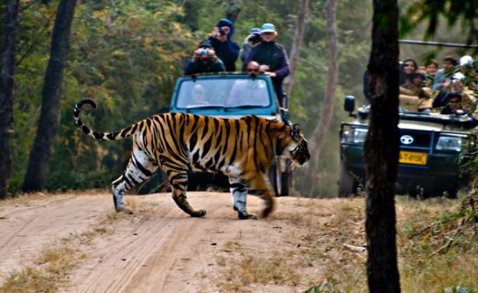 专访野保专家:聊聊旅行中,我们和野生动物的那点事儿