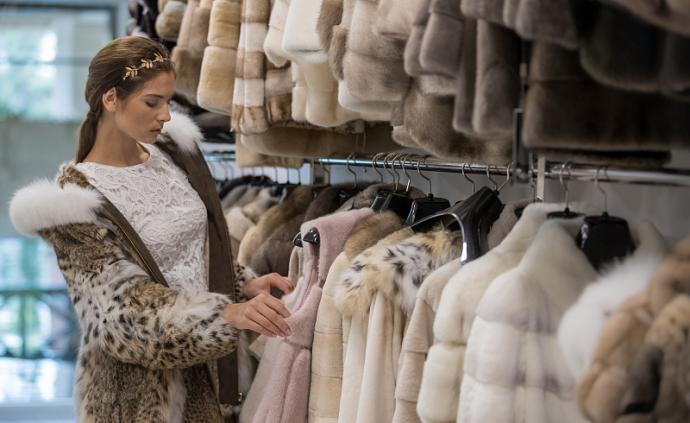 貂皮时尚背后的灾难:林海雪原间的生与死
