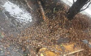山西一运蜂车高速上发生侧翻,千万只蜜蜂大闹高速三小时