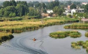 雄安新区管委会:公开征集芦苇综合利用方案,保护白洋淀生态