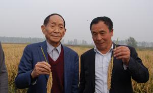 """袁隆平""""超级稻""""再创世界单产纪录,平均亩产达1149公斤"""