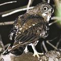 监测校园物种长达15年,北大师生提议设校园自然保护小区