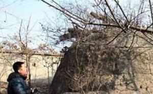媒体探访北京一多次被盗古墓,曾有专家怀疑系清代郡王墓