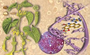 """新研究发现马兜铃酸与肝癌存""""决定性关联"""",仍待进一步研究"""