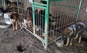 """北京警方查处""""猫狗肉""""黑窝点,一携带身份芯片犬只找到主人"""