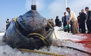搁浅座头鲸被吊起上岸,专家冰存取样