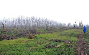 湖南省林业厅督查西洞庭湖自然保护区核心区杨树清理工作