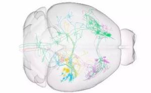 中国建成工业级高通量脑成像设施,或将改变神经科学发展方式