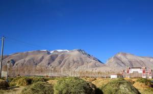 西藏人工种草遥感监测公报:改善草原生态环境成效明显