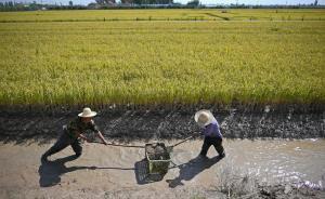 农业部副部长:我国发展中最大的不平衡就是城乡之间的不平衡