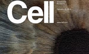 专访《细胞》封面作者张康:AI诊断眼病是这样超越人类的
