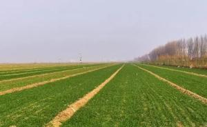 河北将在雄安、石家庄栾城区、辛集市开展土壤污染防治试点