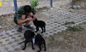 探秘北京公安局警犬基地:警犬自己上门看病惊呆医生