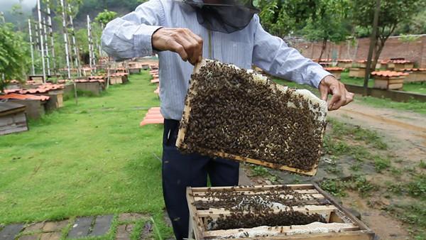 福建林改|养蜂人