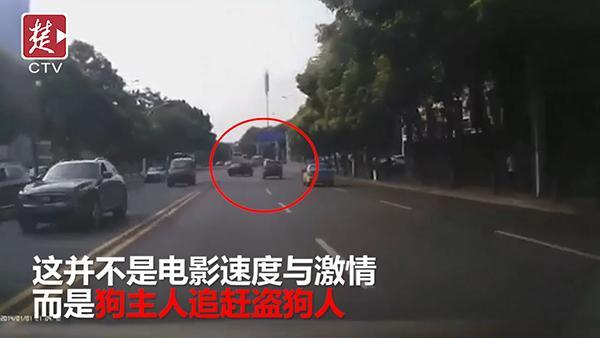 宜昌一餐馆老板用弓弩捕杀8条小狗,狗主人驾车将其撞停