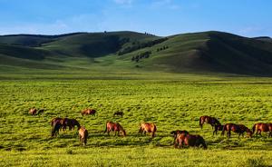 内蒙古自治区成立70周年庆祝大会今举行,人民日报刊发社论